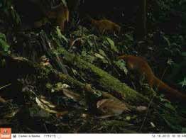 Fauna Corredor LLanganati 2