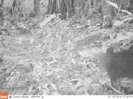 Fauna Corredor LLanganati 6